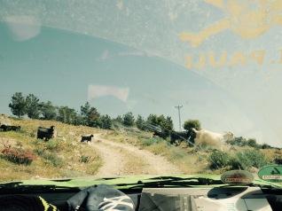 ein gerillter Pfad mit Ziegen durch die Windschutzscheibe fotografiert